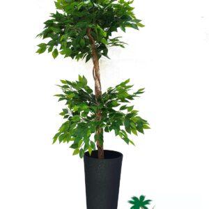 """עץ פיקוס 2 כדורים גובה 180 ס""""מ"""