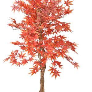 עץ שלכת אדום