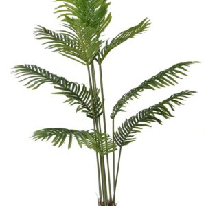 דקל ארקה 180 סמ בעל ענפים דקים