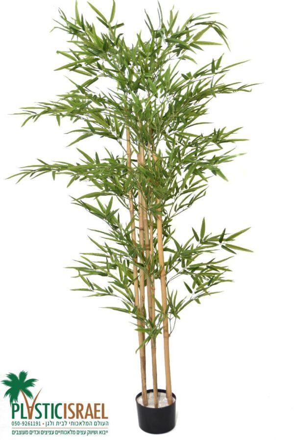 """עץ במבוק מלאכותי גובה 180 ס""""מ"""